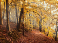 autumn-forest-4561344_960_720